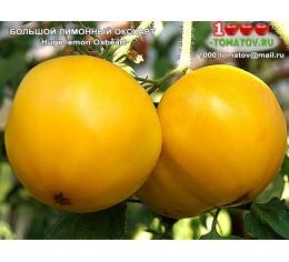 Томат БОЛЬШОЙ ЛИМОННЫЙ ОКСХАРТ Huge lemon Оxheart