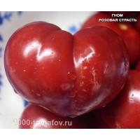 Томат ГНОМ РОЗОВАЯ СТРАСТЬ  Dwarf Pink Passion