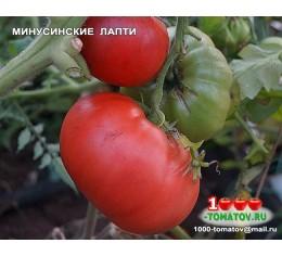 Томат МИНУСИНСКИЕ ЛАПТИ