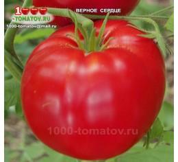 Томат ВЕРНОЕ СЕРДЦЕ